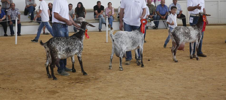 zafra-cabras